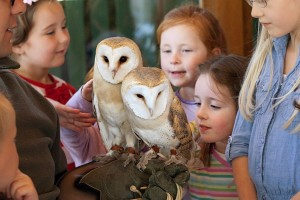 barn yard owls (2)