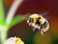 Aqua Dome takes Action to help Protect Bees!
